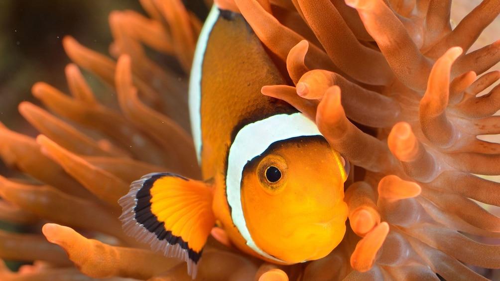 Carregar foto 2 de 5. Fish at the Istanbul Aquarium Theme Park