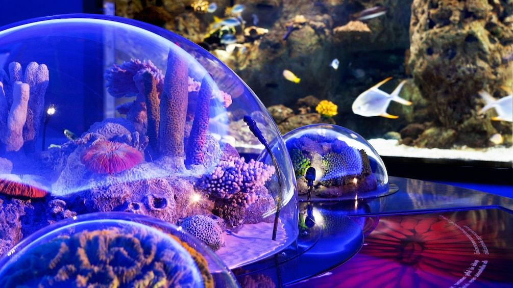 Carregar foto 4 de 5. Aquarium on display the Istanbul Aquarium Theme Park