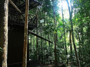Taman Negara National Park Join-In Day Tour
