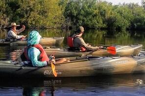 Kayak the Everglades Mangrove Forest and Marsh Prairies with Wildlife Viewi...