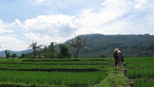 Farmers in a rice field in Bali