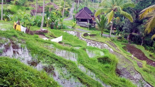 Lush grounds and surrounding forest of the village of Bayad in Bali
