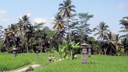 People walking beside a rice field in Bali