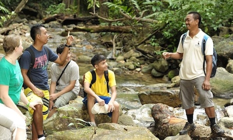 Morning Join-In Rainforest Trek in Langkawi
