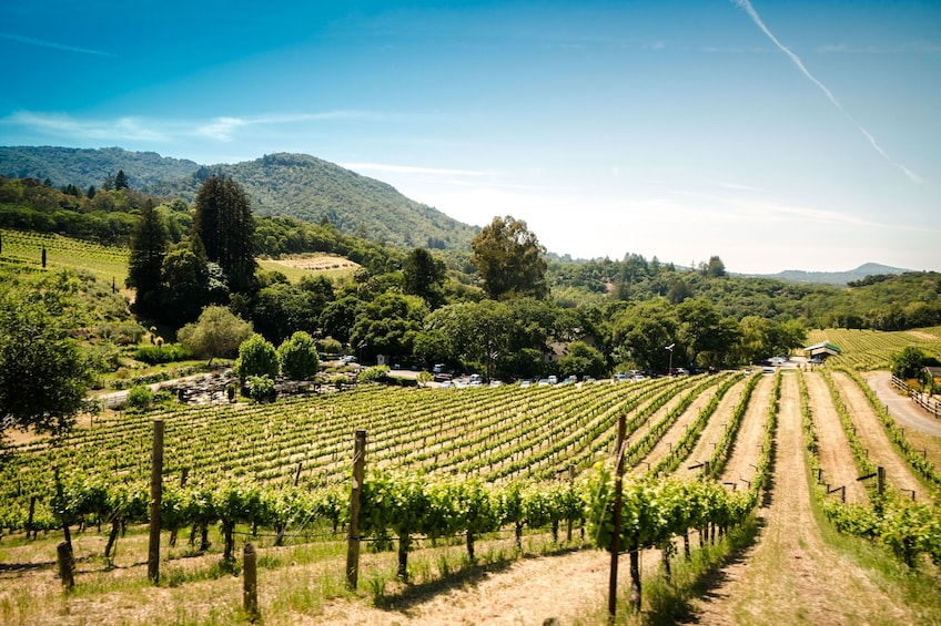 Show item 2 of 10. Napa Valley & Sonoma - Wine Country Tour from San Francisco