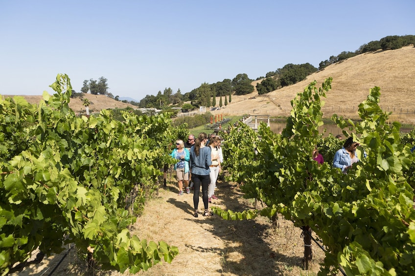 Napa Valley & Sonoma - Wine Country Tour from San Francisco