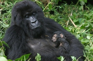 14 Day Uganda & Rwanda Primate Tour (Midrange Tour)