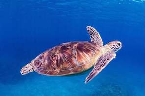 【Okinawa/Kerama】Introductory diving 2 dives & Snorkeling with Free Camera R...