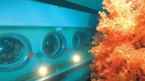 Colorful coral near a submarine at Jeju Island