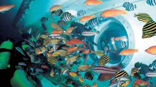 Colorful tropical fish surround a submarine off the coast of Jeju island