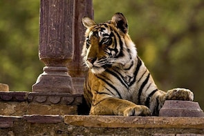 Private One Way Transfer From Mount Abu To Ranthambore in AC Vehicle