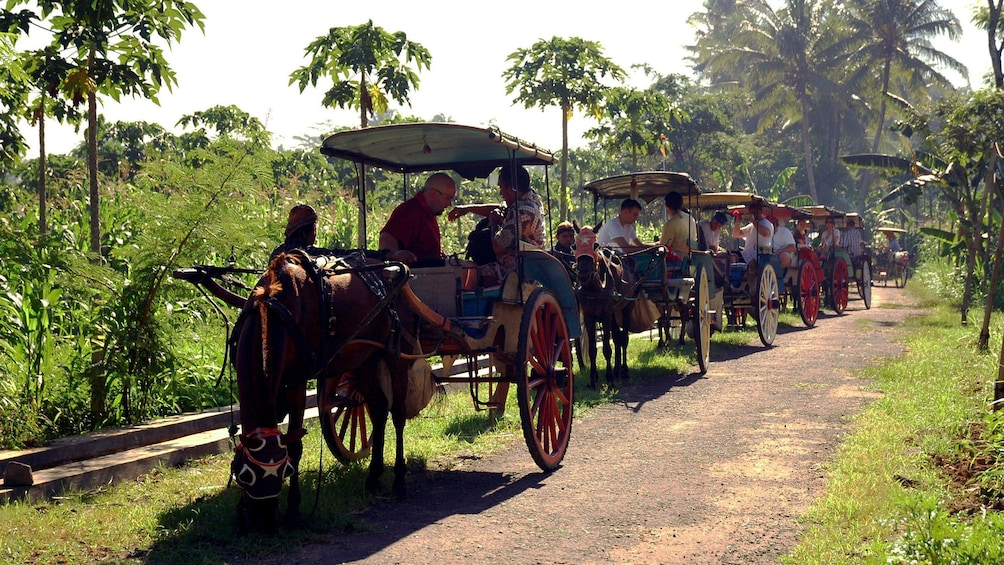 Row of horse-drawn carriages on a tree-lined path in Candirejo Village