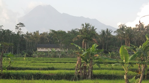 Fruit plantation with mountains in the distance in Yogyakarta