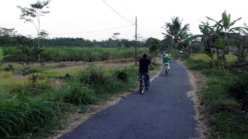 Cycling group on a narrow road in Yogyakarta