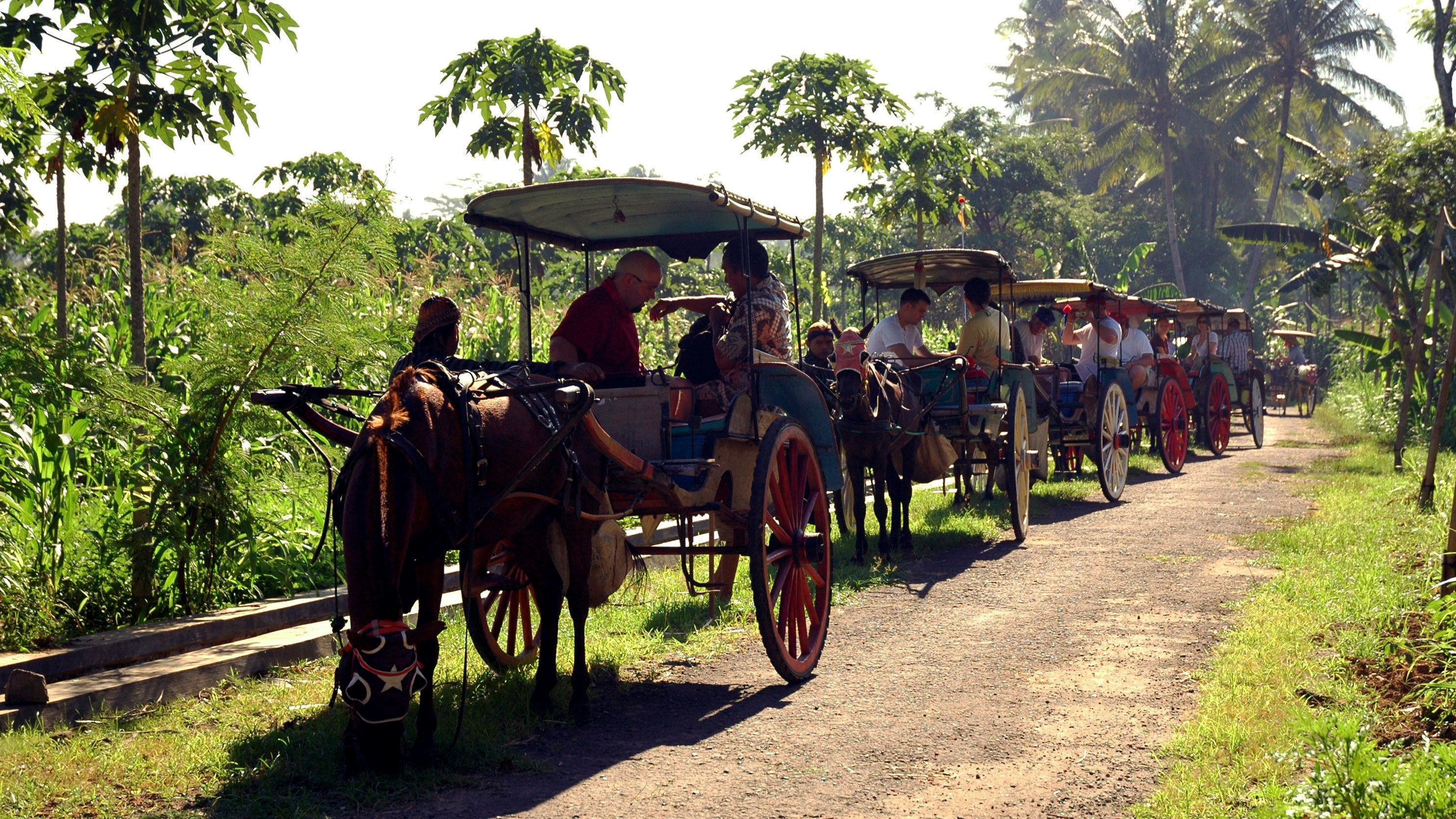 Line of horse-pulled carriages on a tree-lined path in Candirejo Village