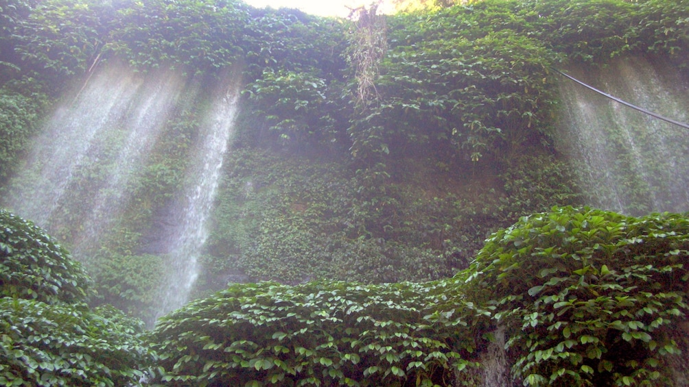 Show item 1 of 4. Ivy covered waterfalls at a park on Lombok Island