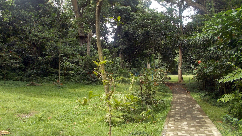 Show item 2 of 4. a path in a park on Lombok island