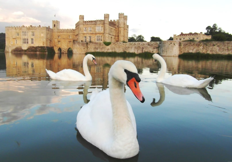 Show item 10 of 10. Private Day Tour to Stunning Leeds Castle, Kent, England