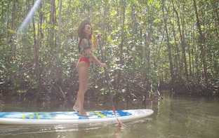 Paddle Board Mangrove Tour