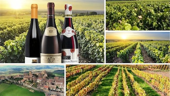Beaujolais Wines 1-Day Private Tour from Paris