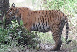 Mission Big Cat, 3 Days Package Tour in Chitwan.