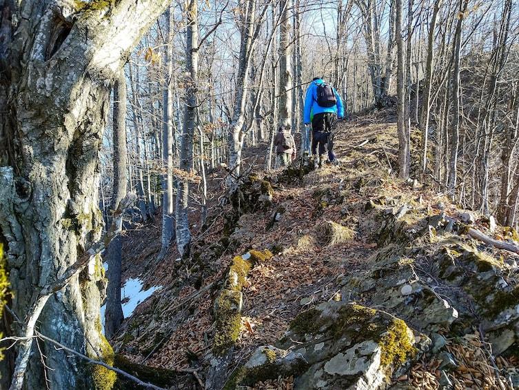 Show item 3 of 8. From Brasov: Wildlife tracking in Putna Vrancea Natural Park