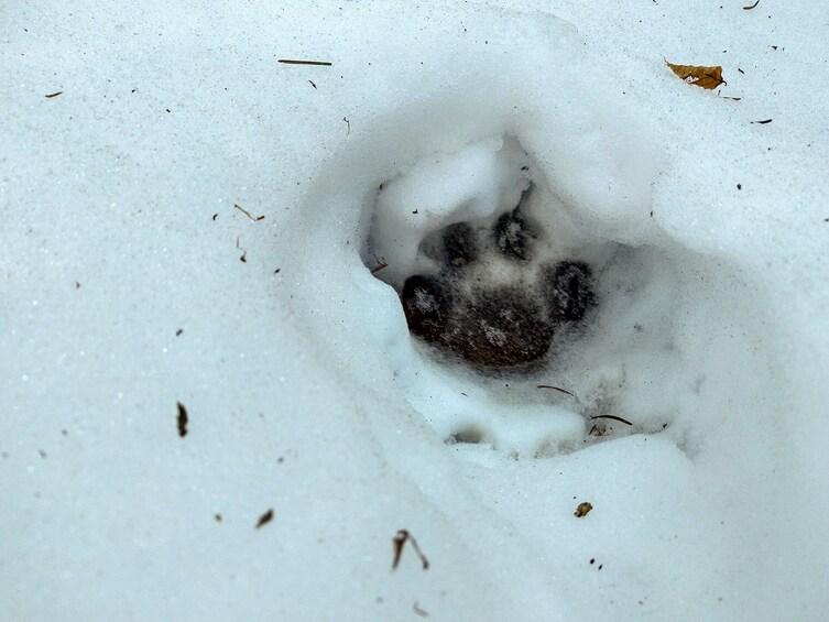 Show item 5 of 8. From Brasov: Wildlife tracking in Putna Vrancea Natural Park