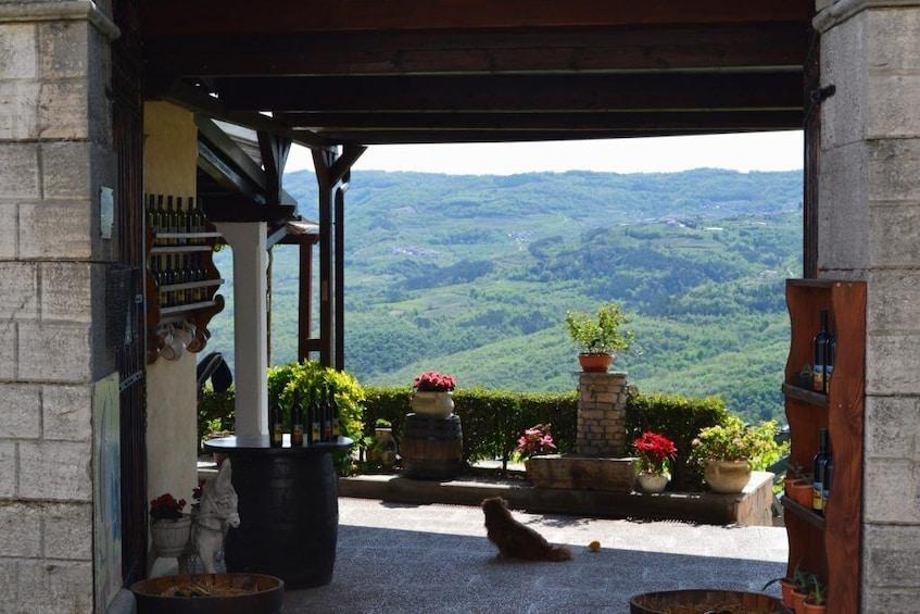 Show item 2 of 6. Istria noTourist Wine Tour