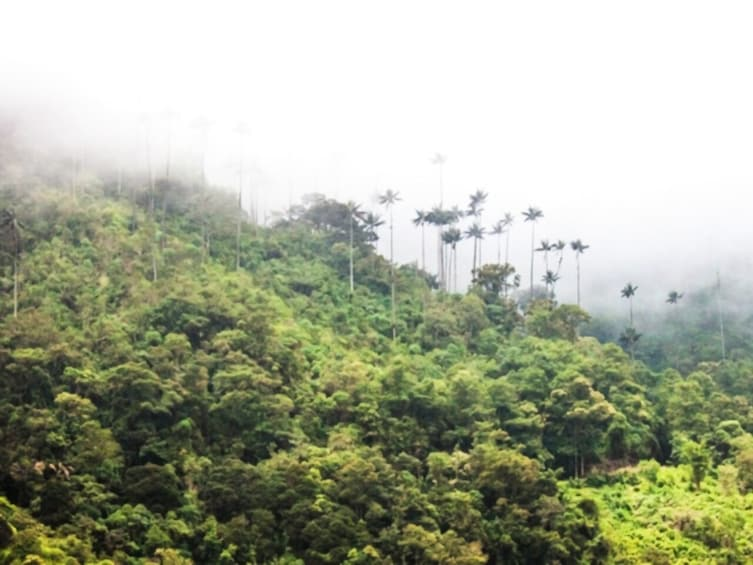 Show item 5 of 10. Cocora Valley exucursion from Salento