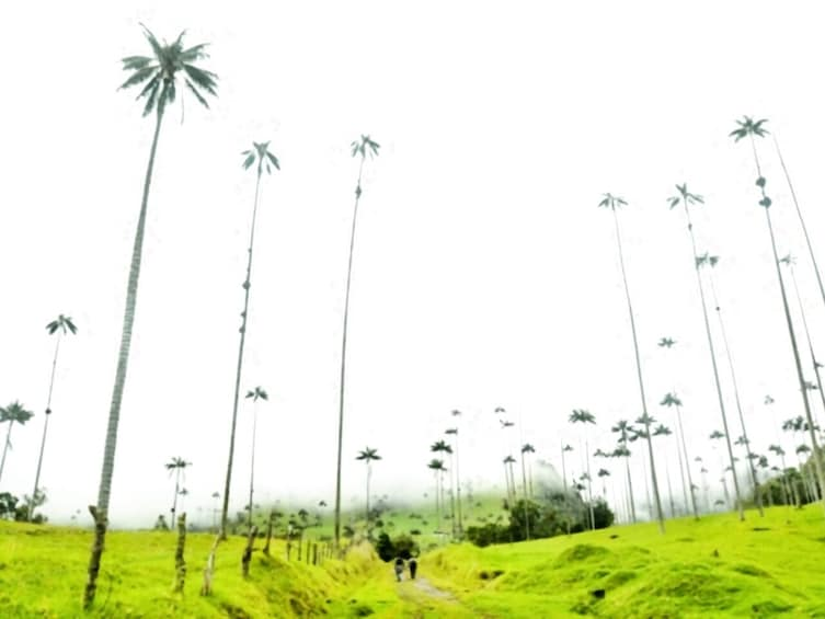 Show item 4 of 10. Cocora Valley exucursion from Salento