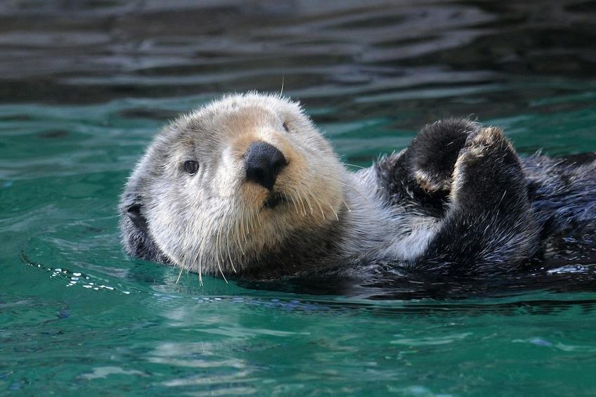 Seattle Aquarium Admission Ticket