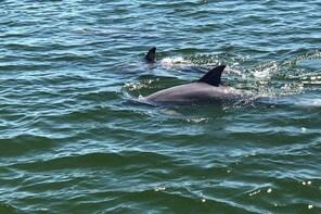 Big Fun Dolphin Tours & SeaLife Experience