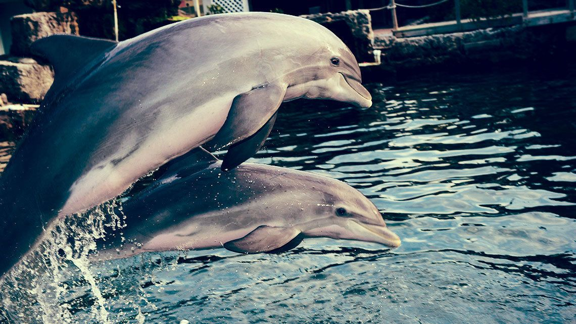 Dolphins leaping out of water tank in Orlando.