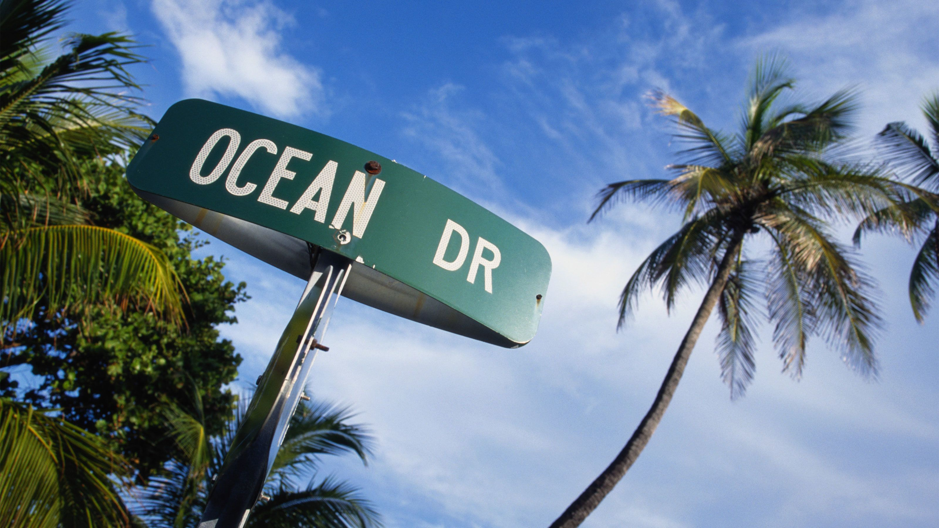 Ocean Drive street sign and palm trees in Orlando.