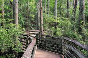 Naturalist-Guided Forest Walk, for Groups of 10-16