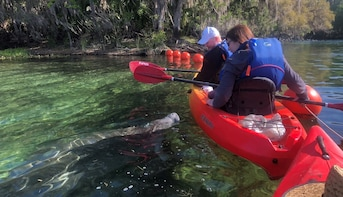 Manatee Encounter & Kayak Tour at Blue Spring State Park