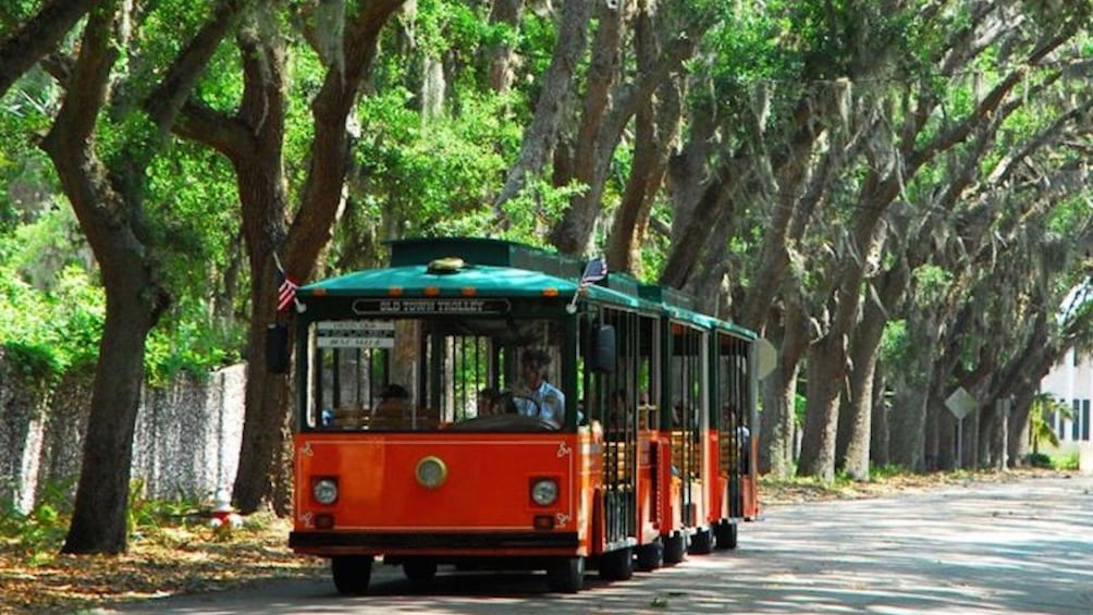 Trolley driving down tree-lined street in St. Augustine.