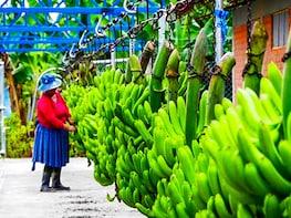 Banana Experience from Santa Marta