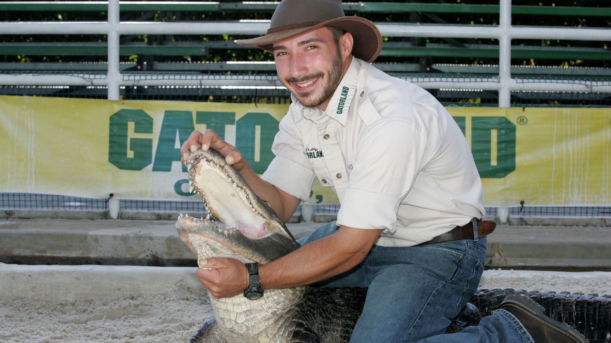 Animal handler wrestling an alligator during a live show at Gatorland in Orlando.