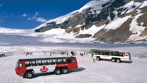 Arrive at the Columbia Icefields via off road tour buses