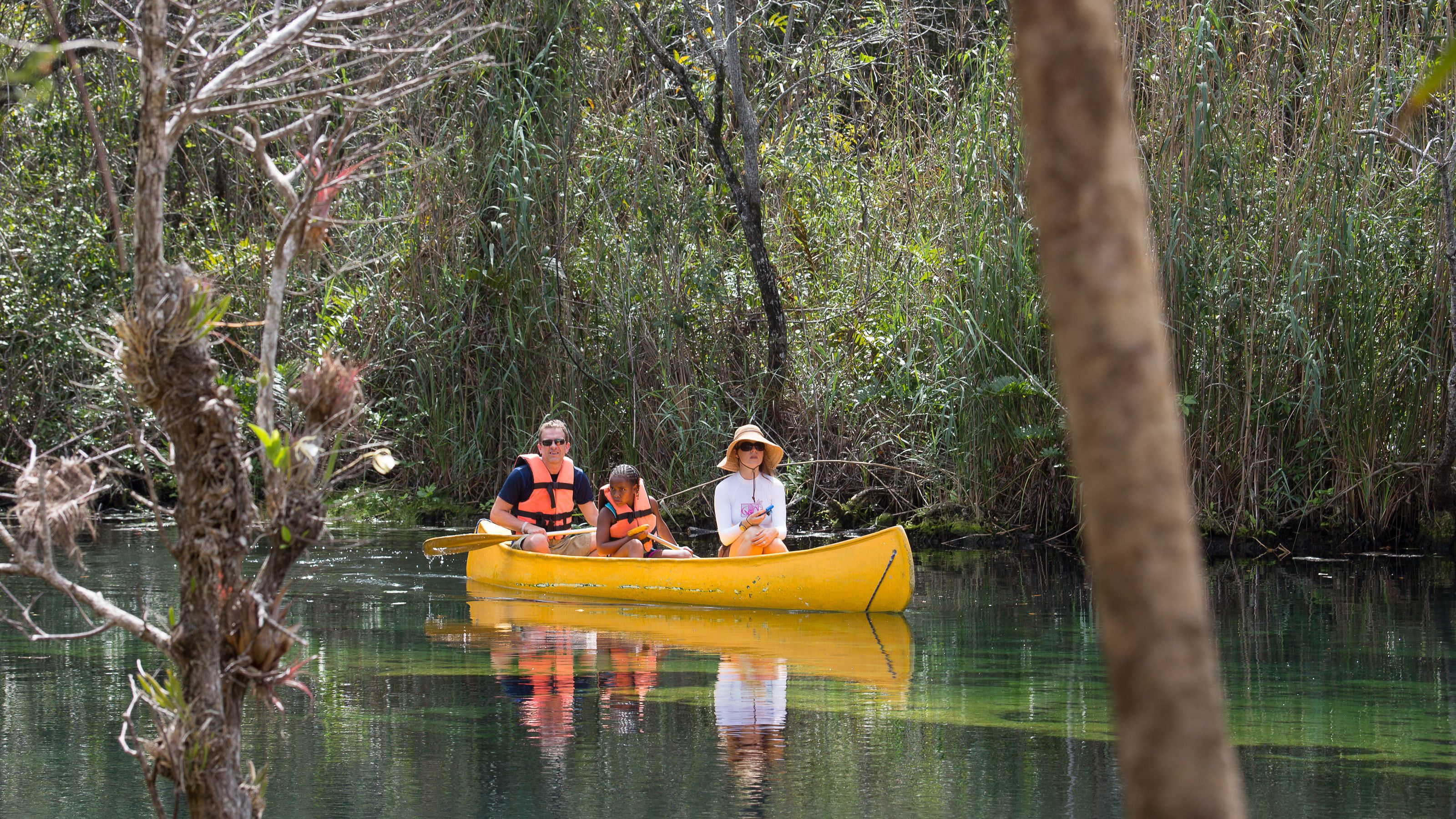 Paddle through the freshwater cenotes in the Yucatan jungle on a canoe