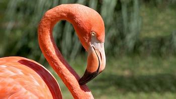 Celestun Flamingo Excursion