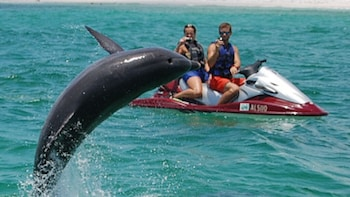Jet-Ski Dolphin Watch