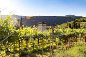 The Valpolicella road from Vine to Wine