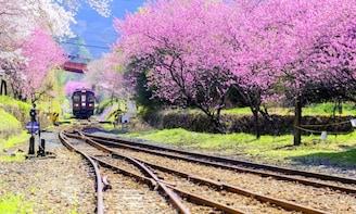 Watarase Valley Railway, Takatsudokyo& Ashikaga Flower Park