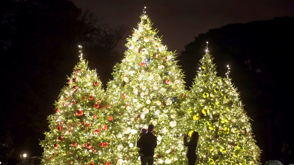 Family looking at Christmas trees at New York Botanical Garden
