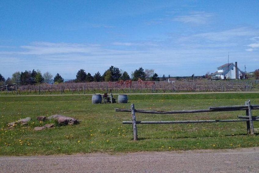 Show item 6 of 6. Central PEI Winery, Apiary and Mead Tasting Tour