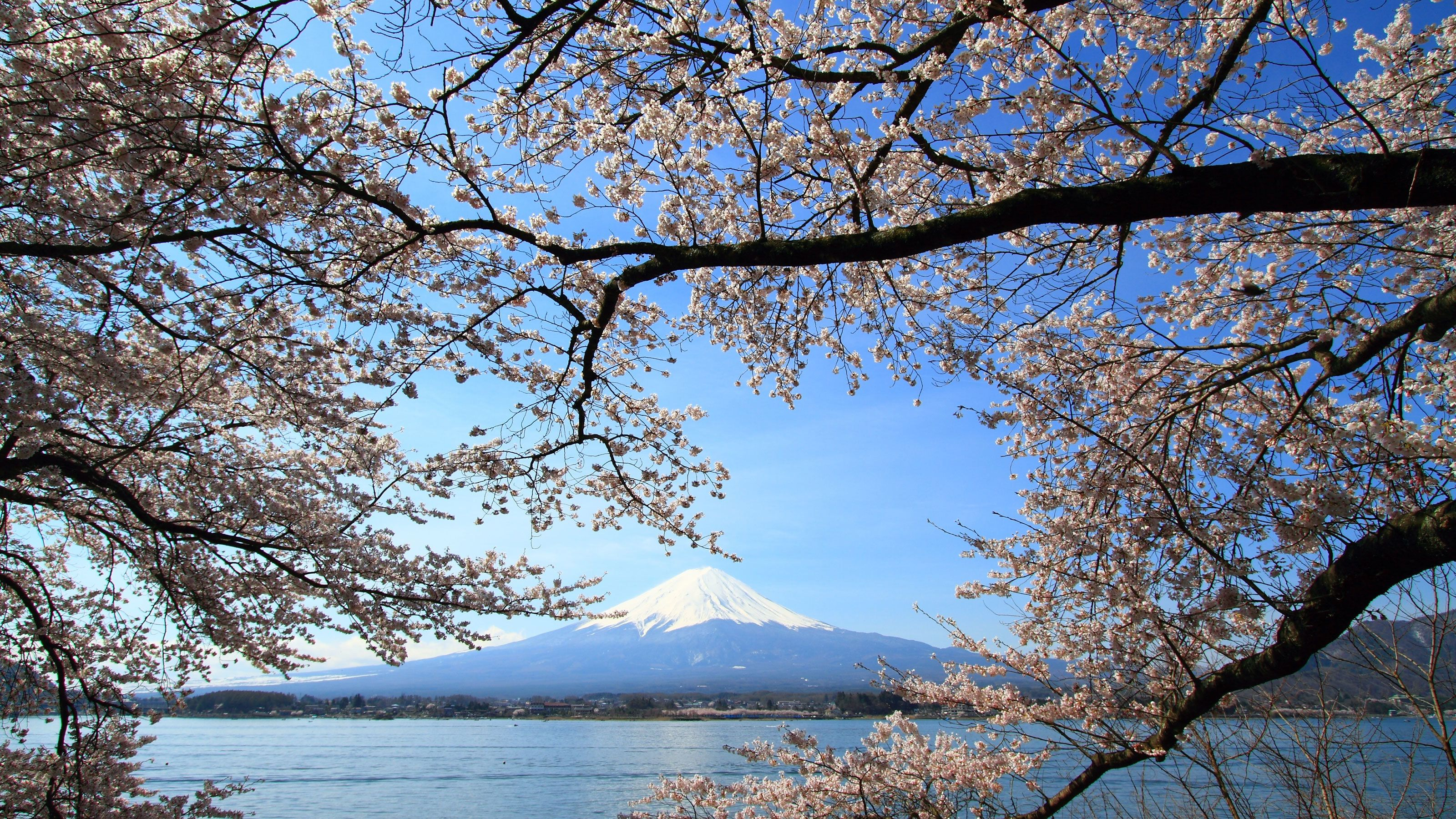 Mount Fuji Full-Day Tour with Cruise & Lunch