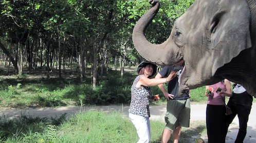 Tourists petting an elephant at the Phnom Tamao Wildlfe Rescue Centre in Tamao