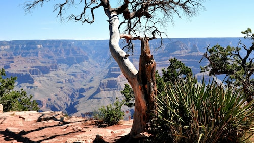 Scenic view atop the Grand Canyon in the afternoon